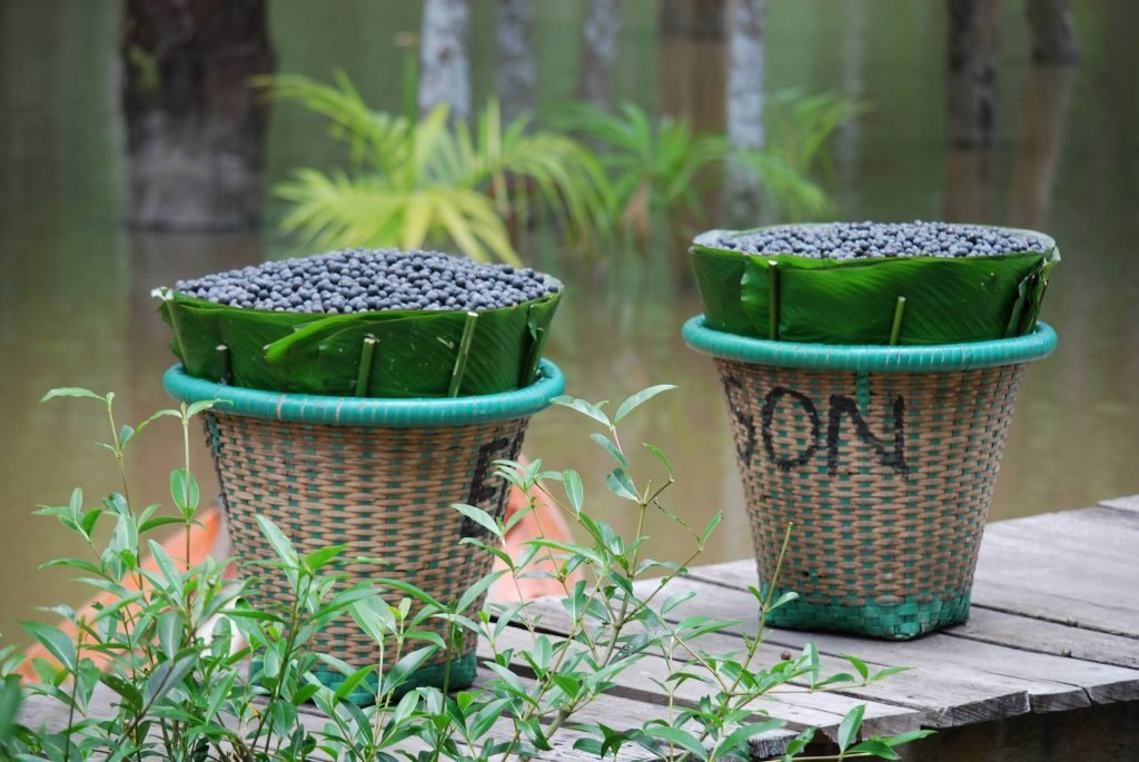 Açaí palm berries are packed with nutrients, but processing them is labour intensive. GEDAE team built an efficient machine and an off-grid system so the community can separate the açaí pulp from seeds and sell directly to a market at a fairer price.
